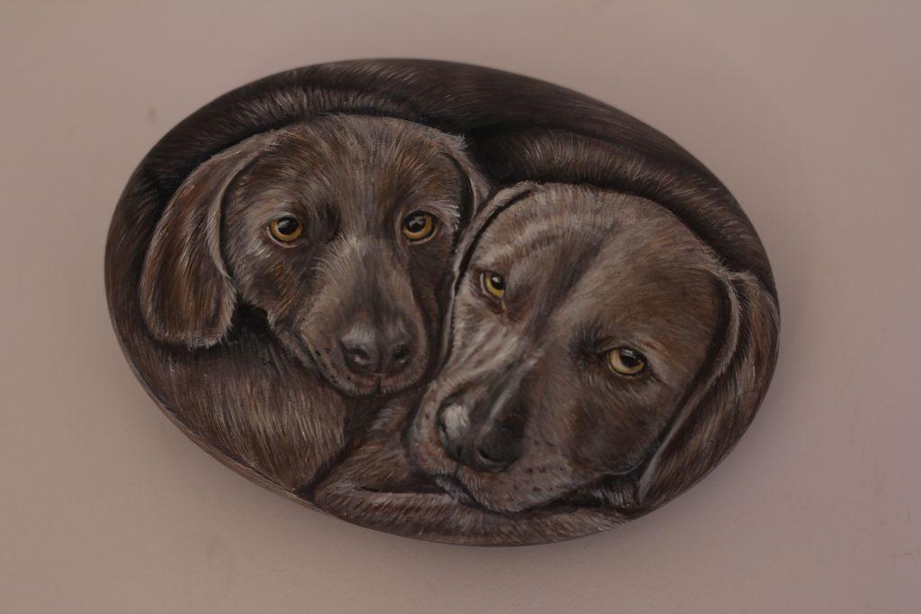 Due cani in un sasso