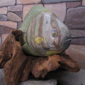 Pinnate Spade Fish